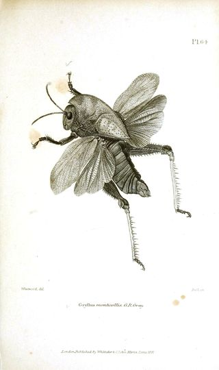 Animal-Insect-Bee-Flying2Vintage Printable