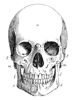 Fabricprintable-skull-graphicsfairy
