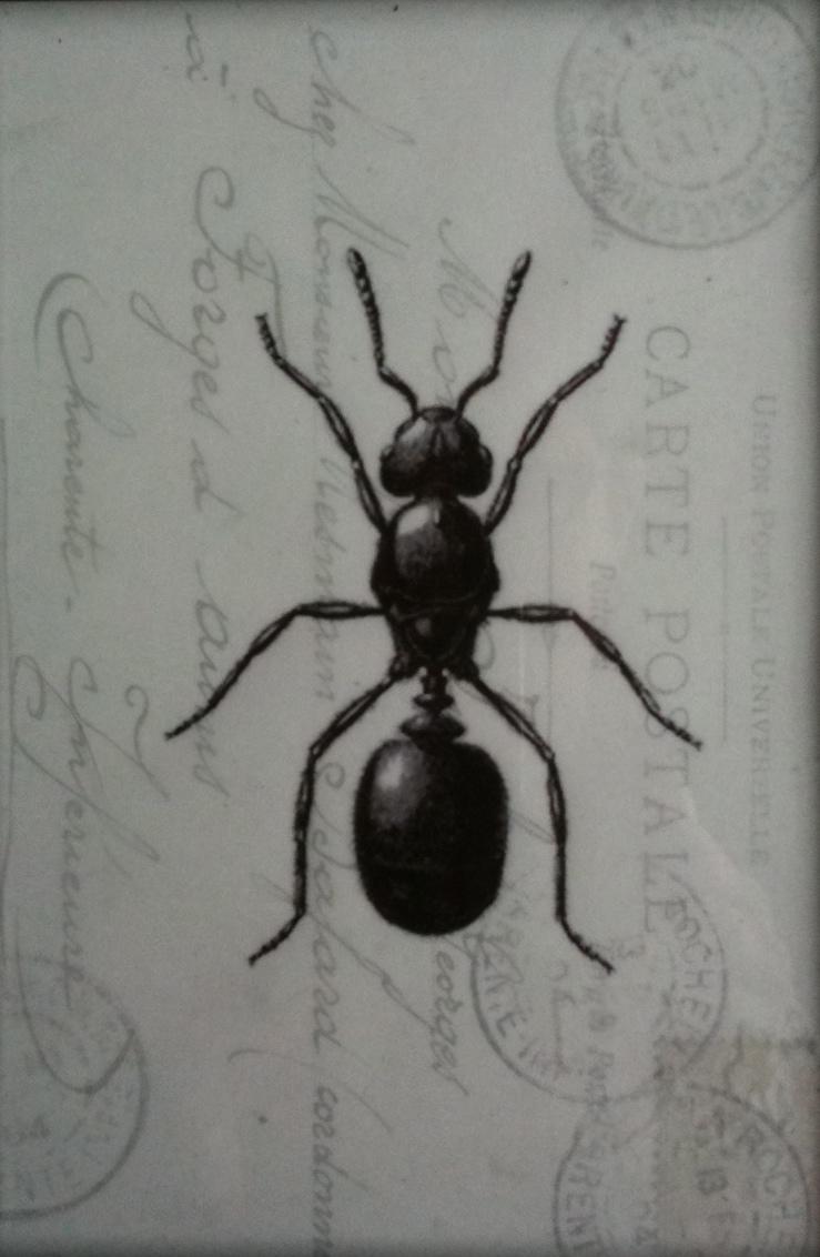 Bug Detail