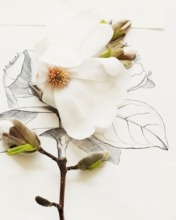 Magnolia and flower