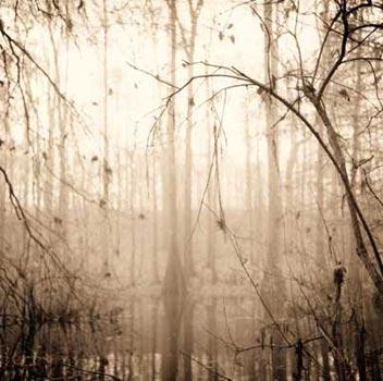 David Halliday Abstract Nature