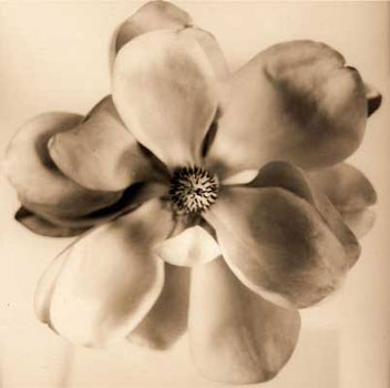 David Halliday Copper Magnolia