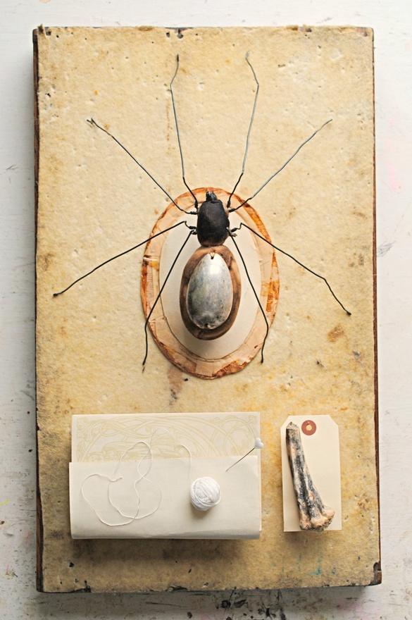 Mister Finch spider