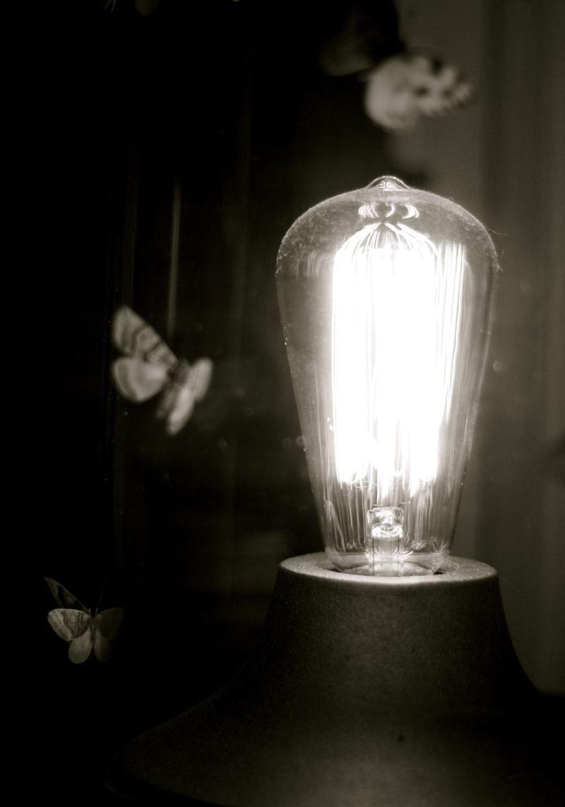 Vellum moths by Suzonne Stirling Urban Comfort