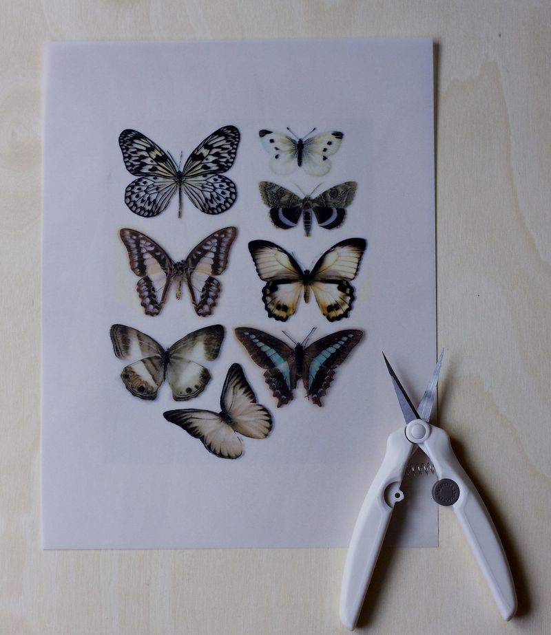 Vellum Moths Step 2