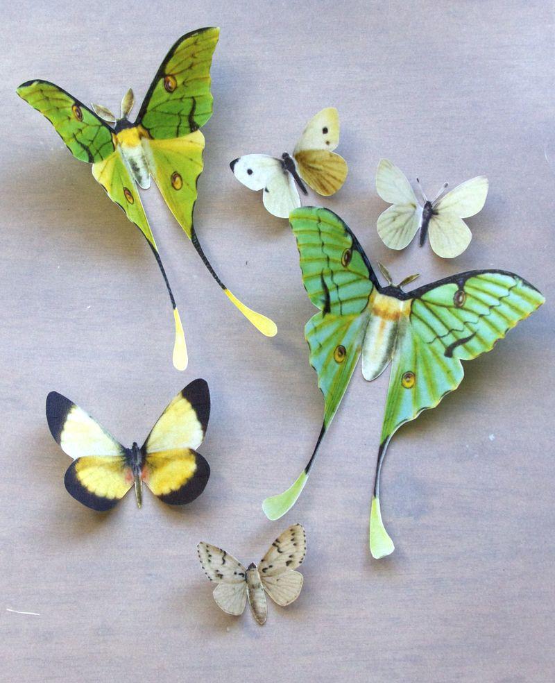 Vellum Luna Moths