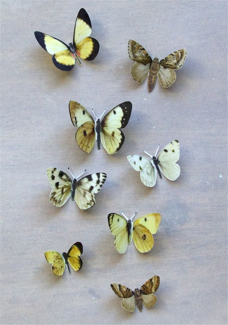Vellum Moths