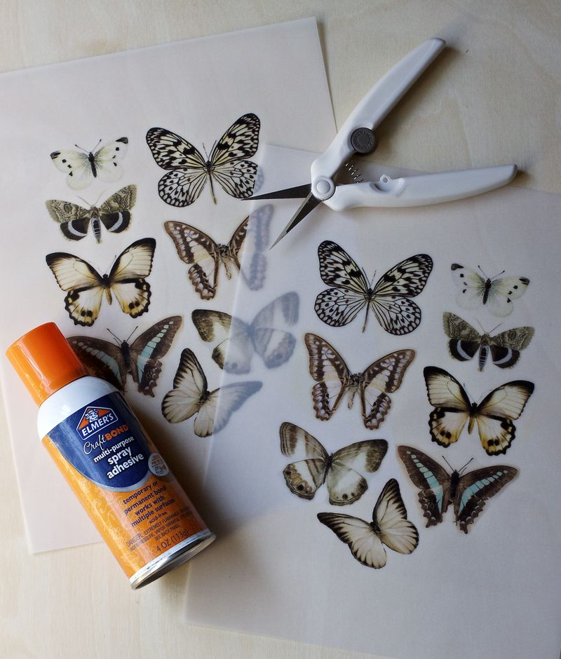 Vellum Moth Step 1