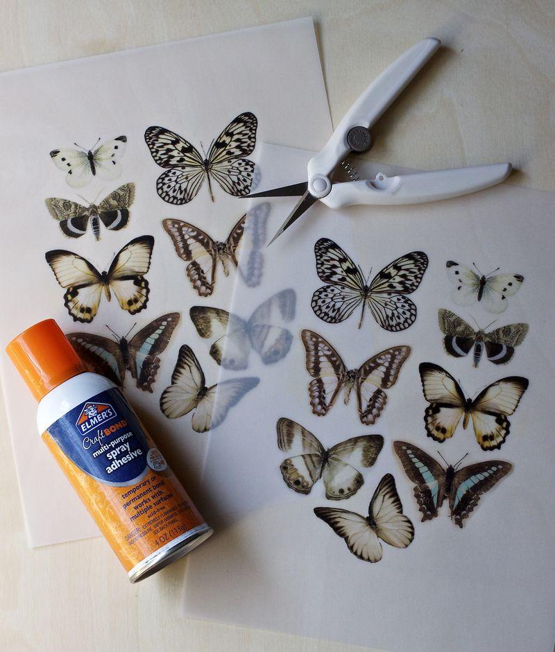 Vellum Moth Step 1