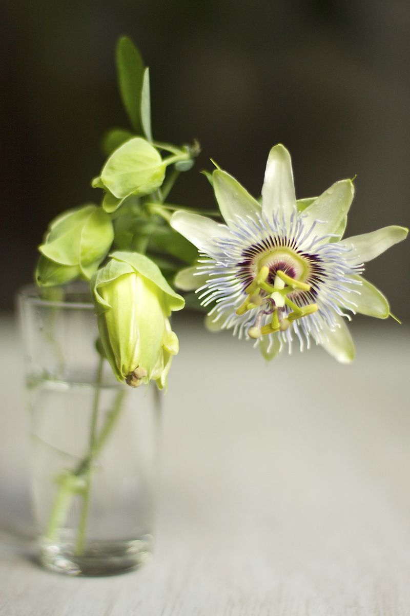Passion Flower | Suzonne Stirling