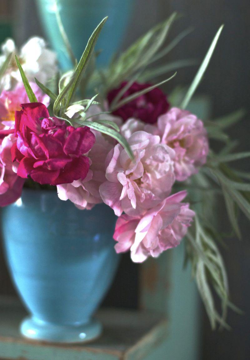 Roses | Suzonne Stirling