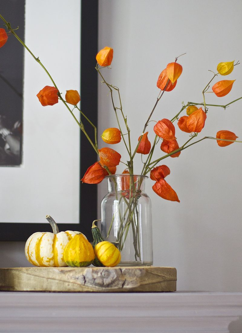 Nature by Mail Order: Fall Finds - Urban Comfort