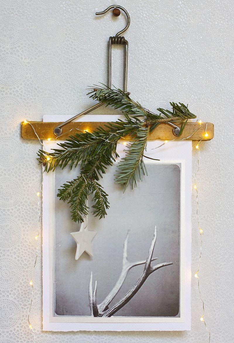 Reindeer + Their Antlers | Urban Comfort