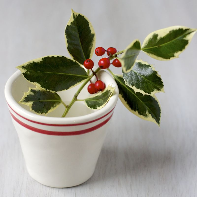 Variegated Holly Inspiration