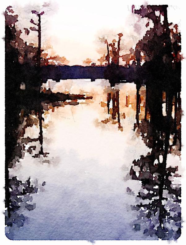 Swamp | Urban Comfort