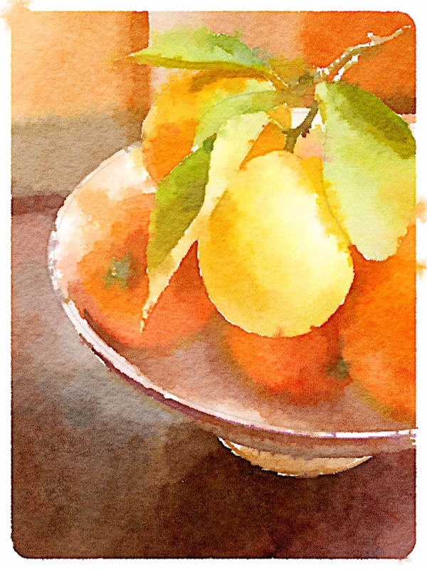 Still Life with Citrus | Urban Comfort