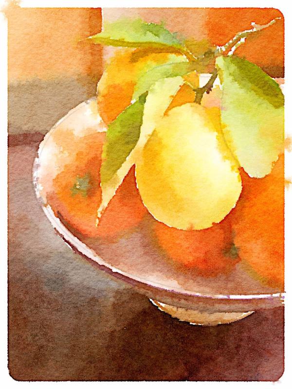 Still Life with Citrus | Urban Comfort